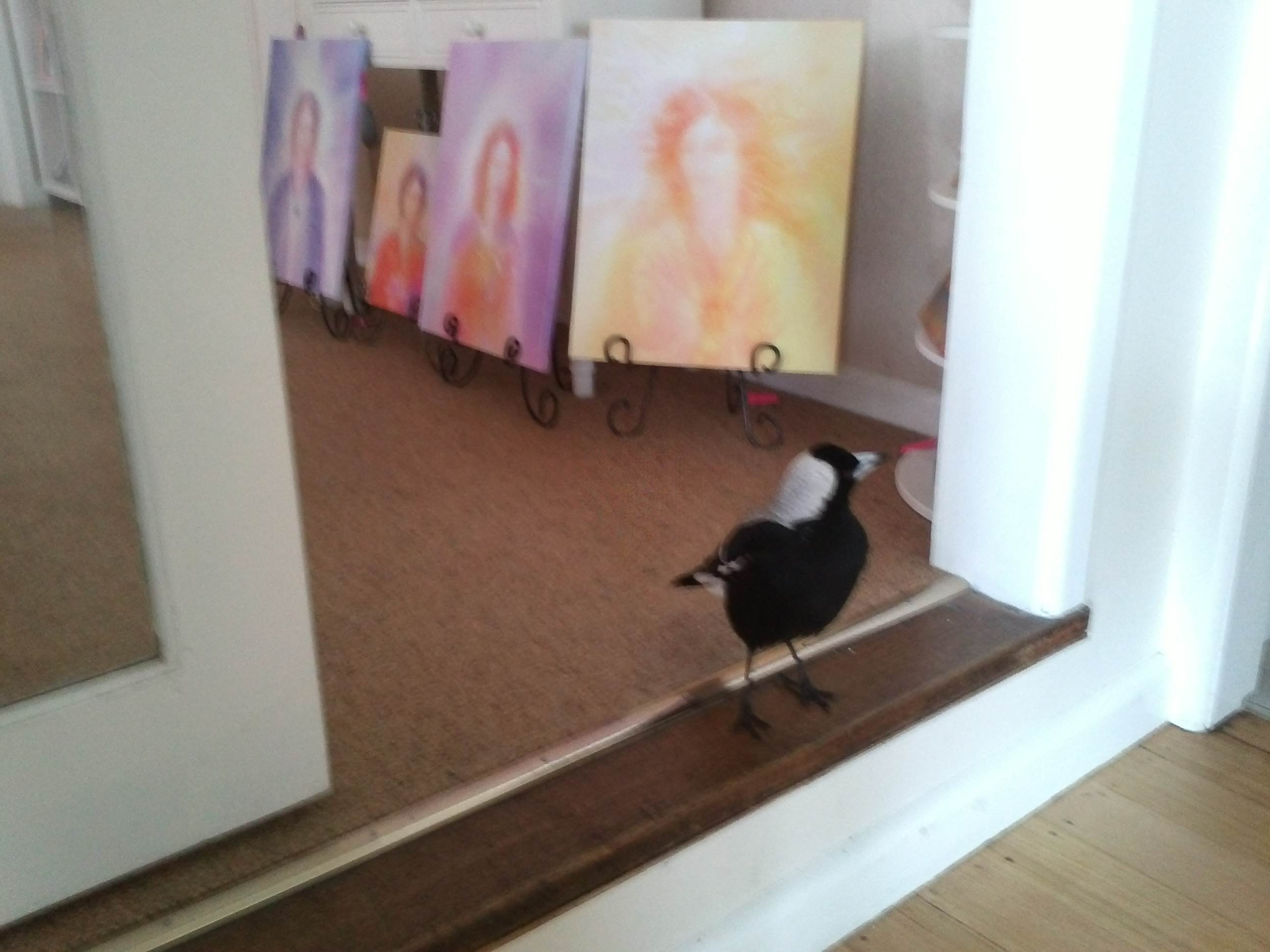 A photo of a Magpie who loves Angels and visits my Angel Gallery.